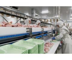Работа в России птица фабрика